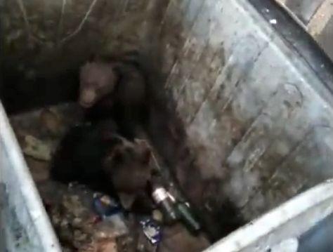 Doi pui de urs, eliberați de jandarmi dintr-un tomberon, în Poiana Brașov |VIDEO