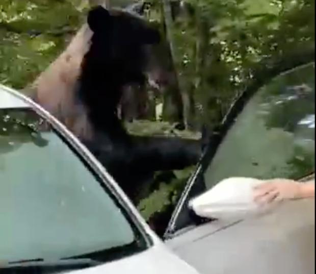 Mașină vandalizată de un urs brun, într-un parc natural din SUA. Cum a ieșit din confruntarea cu fiara |VIDEO
