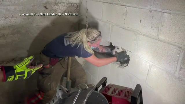 Cățel dispărut în SUA, găsit captiv între doi pereți. Cum a ajuns acolo