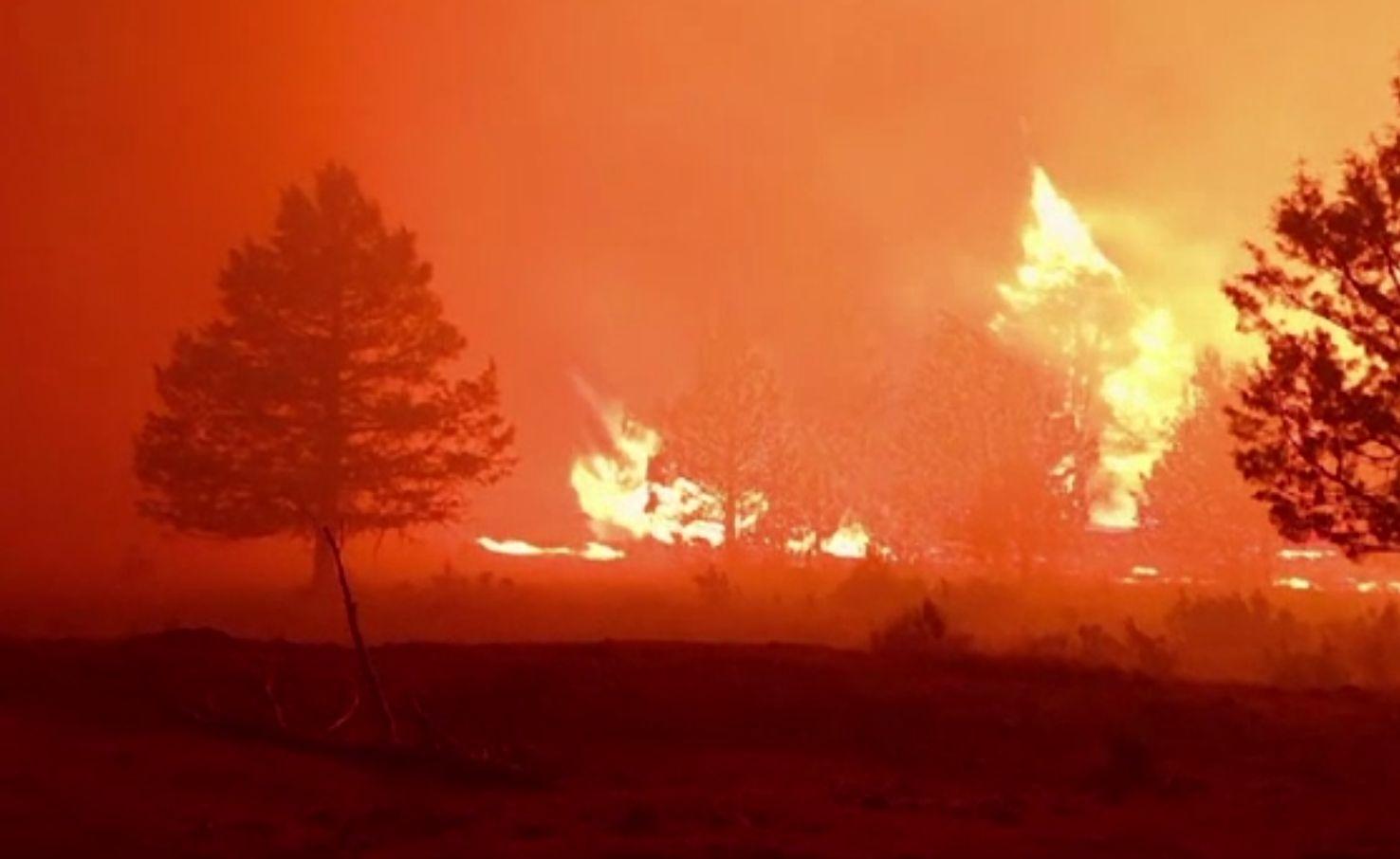 Incendii majore de vegetație în vestul SUA. Sunt cel puțin 16 focare