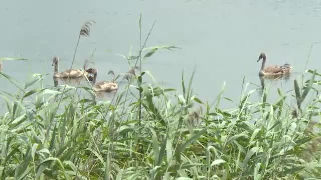 Ariile sălbatice din București. Unde poți vedea specii rare de păsări