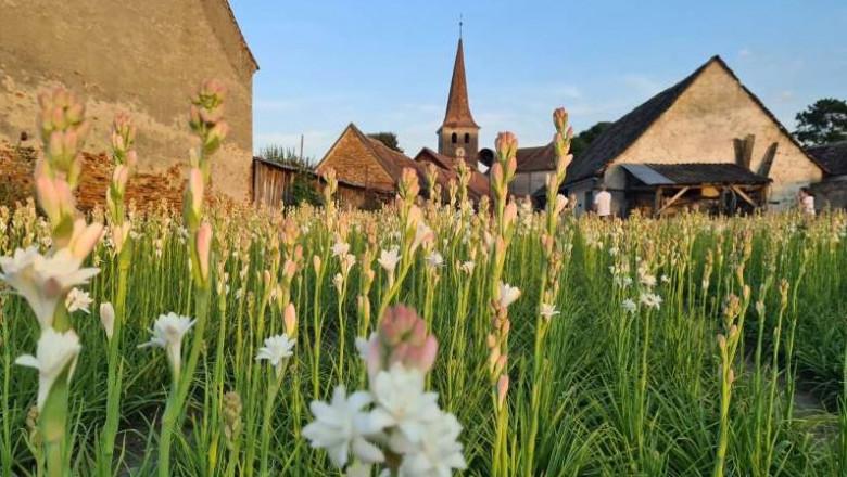 Prima floare din România protejată la nivel european. FOTO
