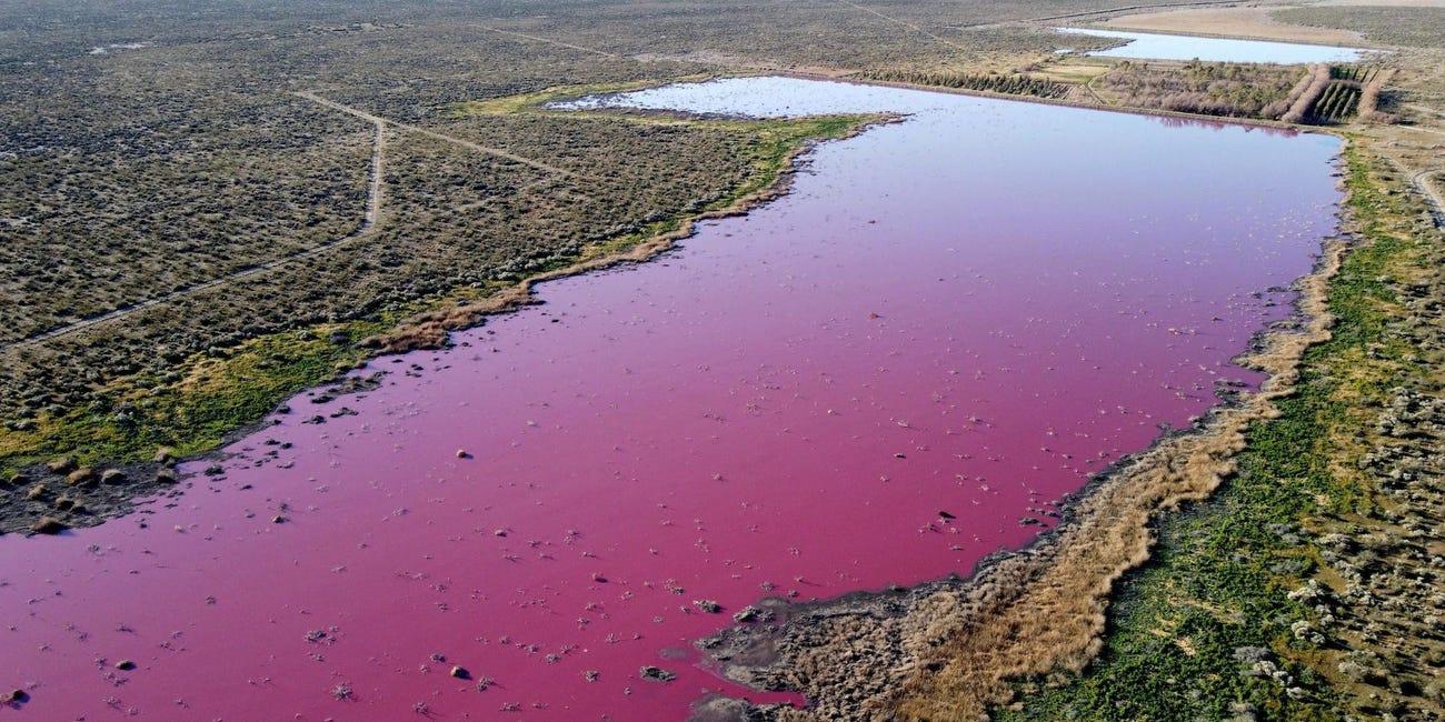 Un lac din Patagonia a devenit roz peste noapte. Care este explicația
