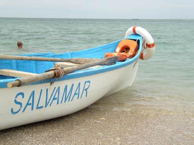 Vitel salvat din Marea Neagra. S-a zbatut 20 de ore in apa
