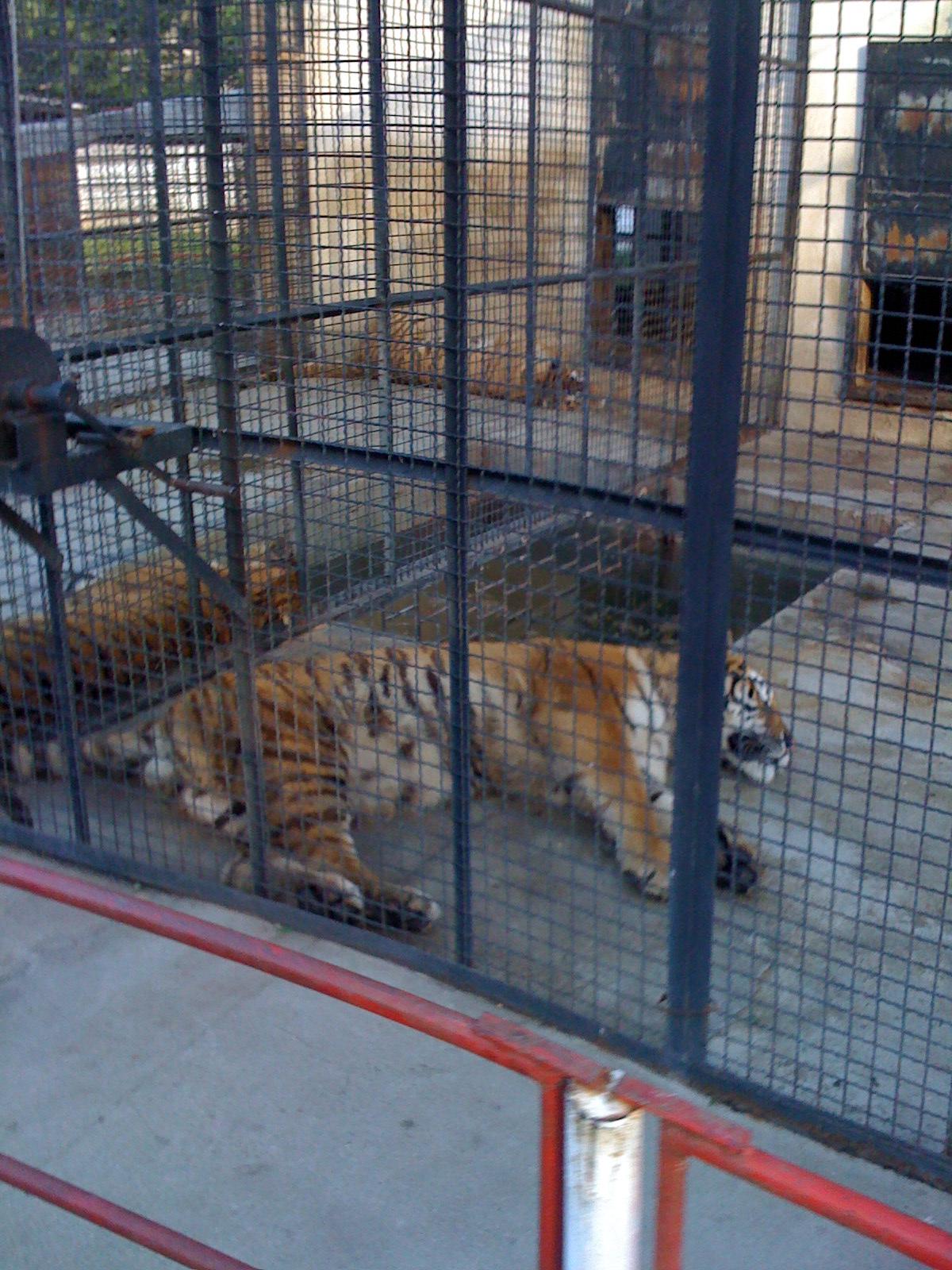 Animale de vanzare. Se desfiinteaza gradina zoo din Baia Mare