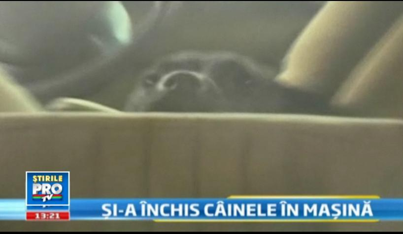 Un barbat din Brasov si-a incuiat cainele in masina, trei zile. Animalul a latrat pana la epuizare