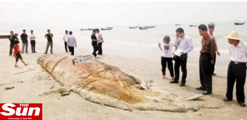 FOTO. Monstru marin de aproape 5 tone gasit pe plaja. Nimeni nu stie ce animal este