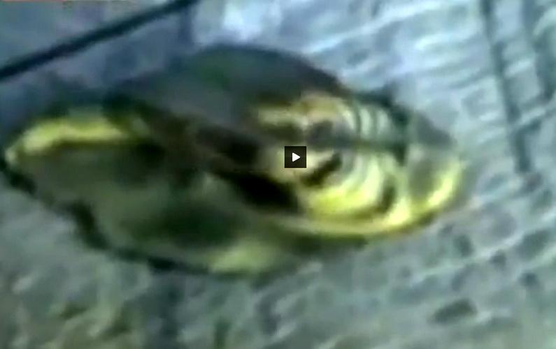 Creatura extraterestra care pare otravita. Se zbate intr-o substanta verde. VIDEO