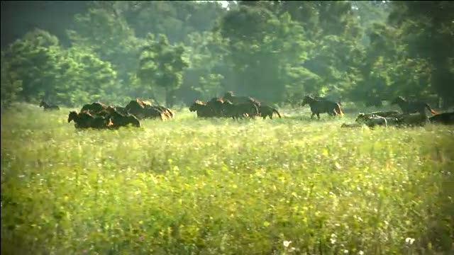 Tata si fiu,acuzati de evaziune fiscala dupa ce au vandut cai si animale salbatice din padurea Letea