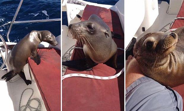 Imaginea care i-a schimbat viata: gestul de afectiune al unui pui de foca