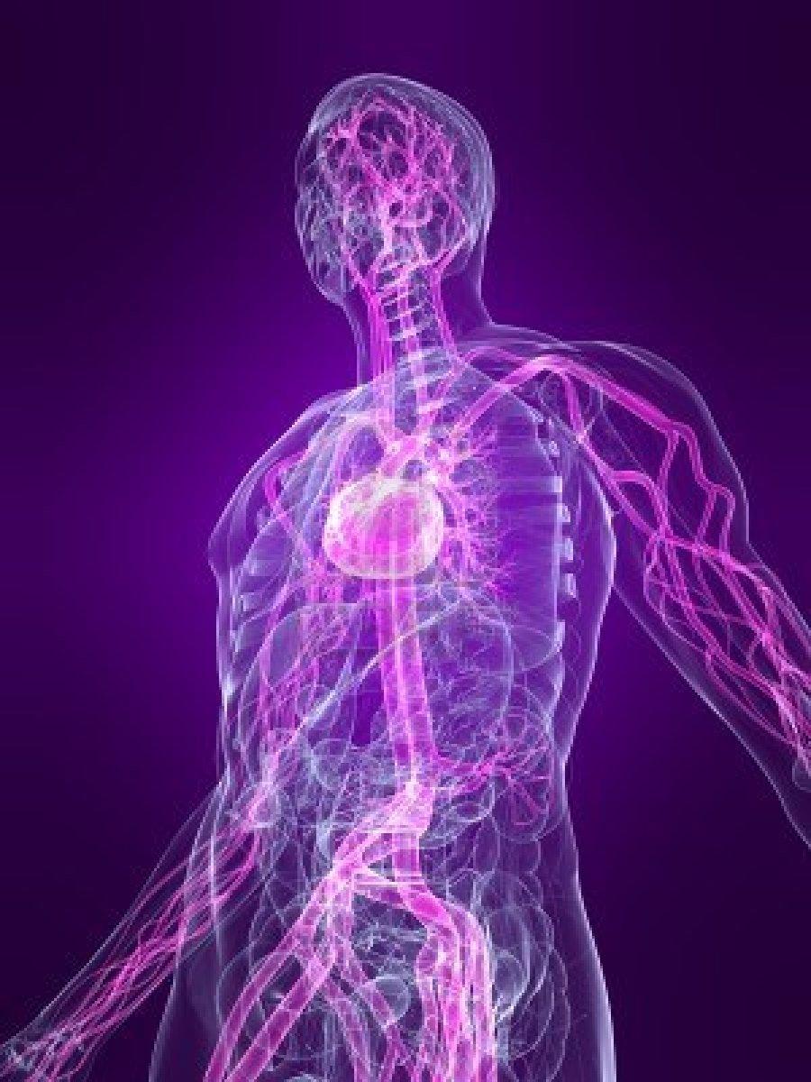 A fost descoperita o noua componenta a corpului uman.