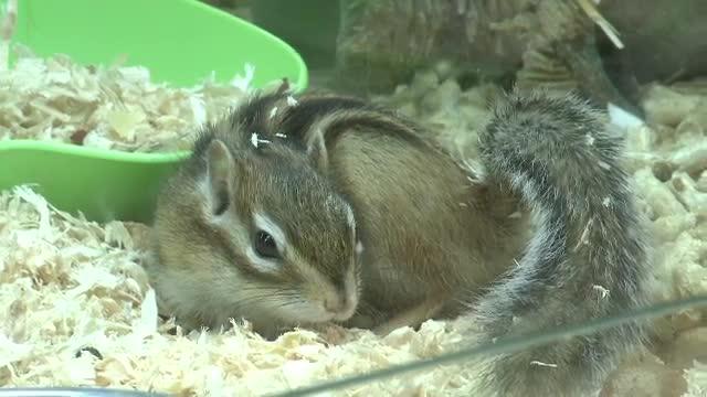 Aricii africani si veveritele siberiene, noile animale de companie ale romanilor. Cat costa un exemplar