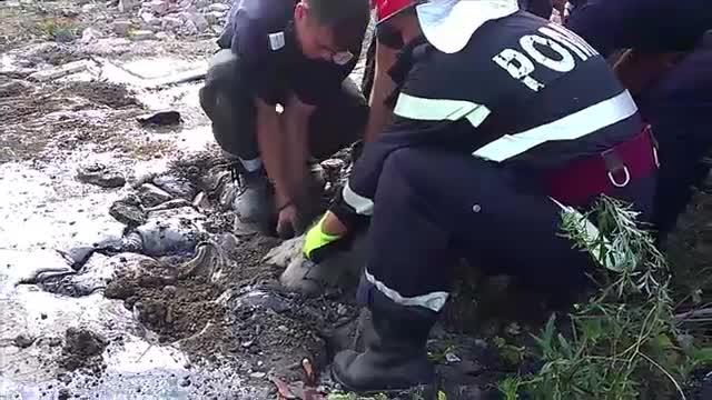 Operatiune dramatica pentru salvarea a 9 oi din Dej care au cazut intr-o groapa cu smoala. Finalul nu a fost unul fericit