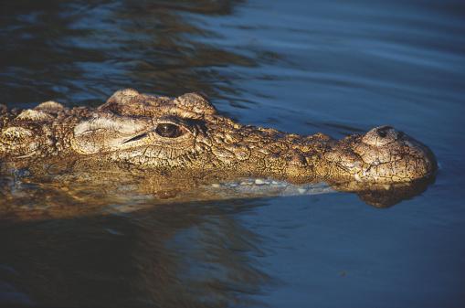 Britanicii, ingroziti de un crocodil care ar vana in apele raului Avon