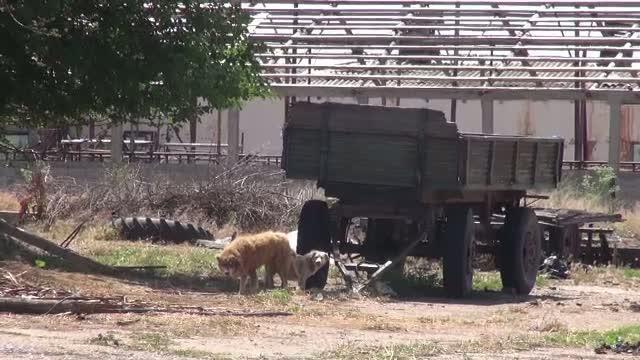 Trupul unui barbat disparut de cateva luni, gasit de cativa caini. Animalele au fost vazute jucandu-se cu craniul