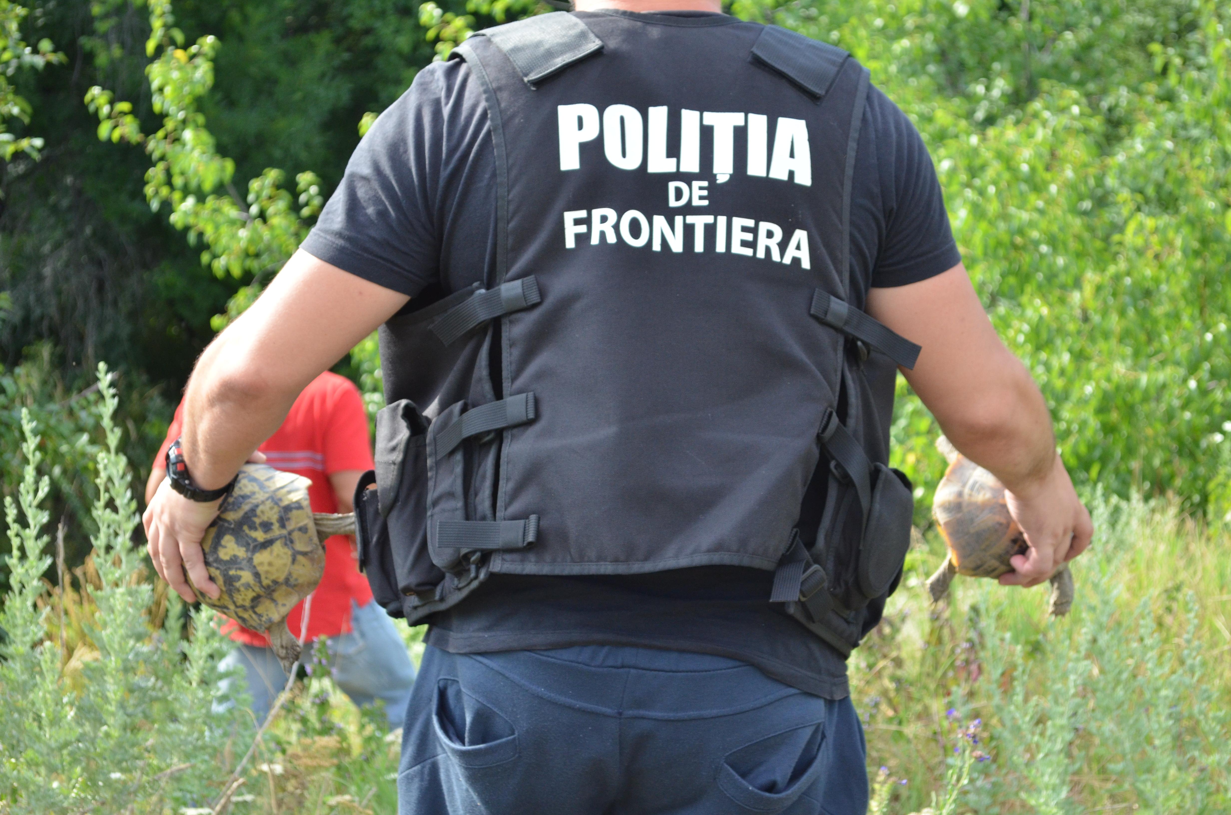 Oamenii legii au prins un traficant de testoase din Romania care vindea animalele pe net. Ce pedeapsa risca