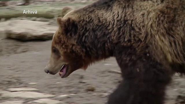 Barbat atacat de urs, in Bistrita Nasaud: