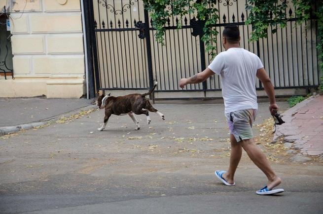 Scene terifiante in Braila. Ce s-a intamplat dupa ce un barbat a iesit pe strada cu un pitbull fara lesa si botnita. FOTO