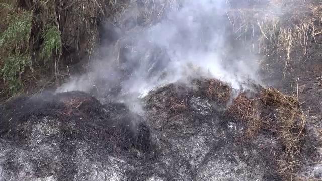 O femeie insarcinata a incendiat un teren din judetul Bacau, motivand ca ii apartine.