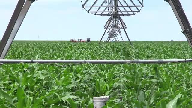 Diferentele uriase dintre agricultorii care au sistem de irigatii si cei care se roaga sa vina ploaia