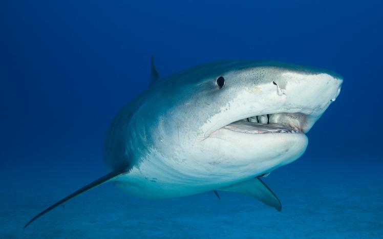 Un turist ceh a fost ucis de un rechin. Unde s-a petrecut tragedia