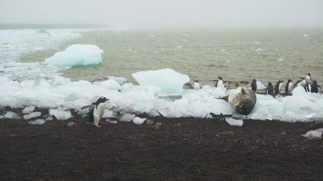 Oamenii de știință, alarmați: ghețurile din Antarctica se topesc de trei ori mai rapid