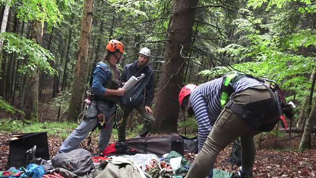 Telefoane montate în copaci pentru a-i depista pe hoţii de lemne şi pe braconieri