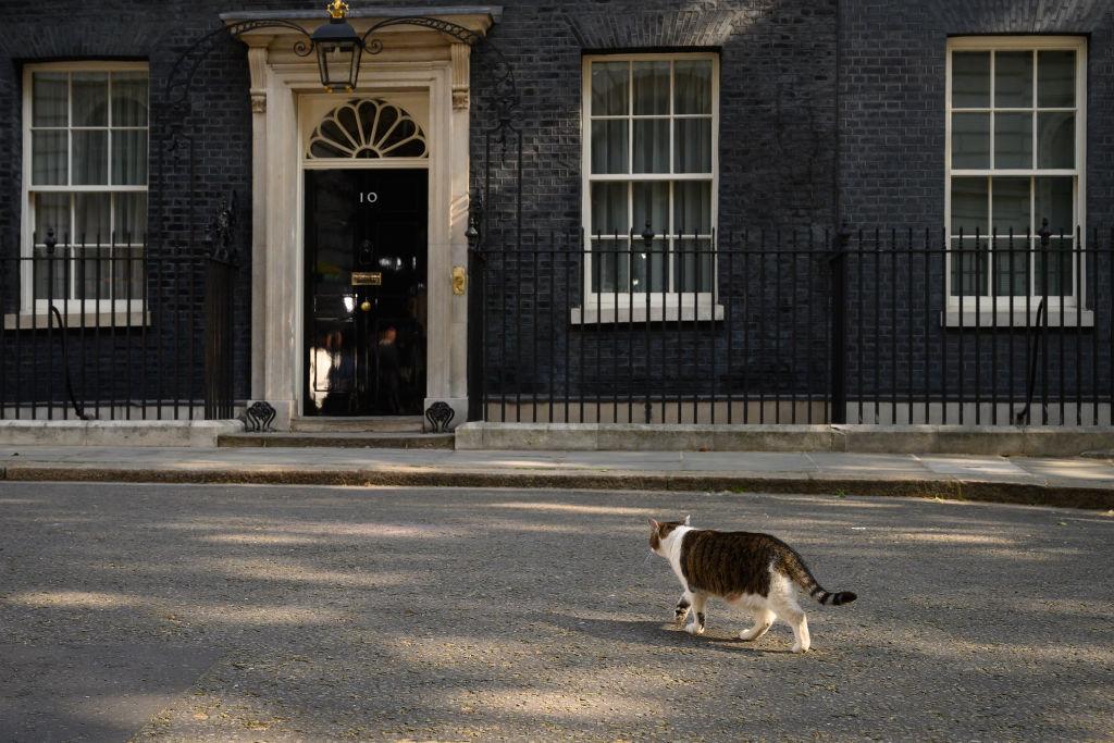 Motanul Larry a provocat haos în timpul vizitei lui Trump la Londra. Unde s-a ascuns