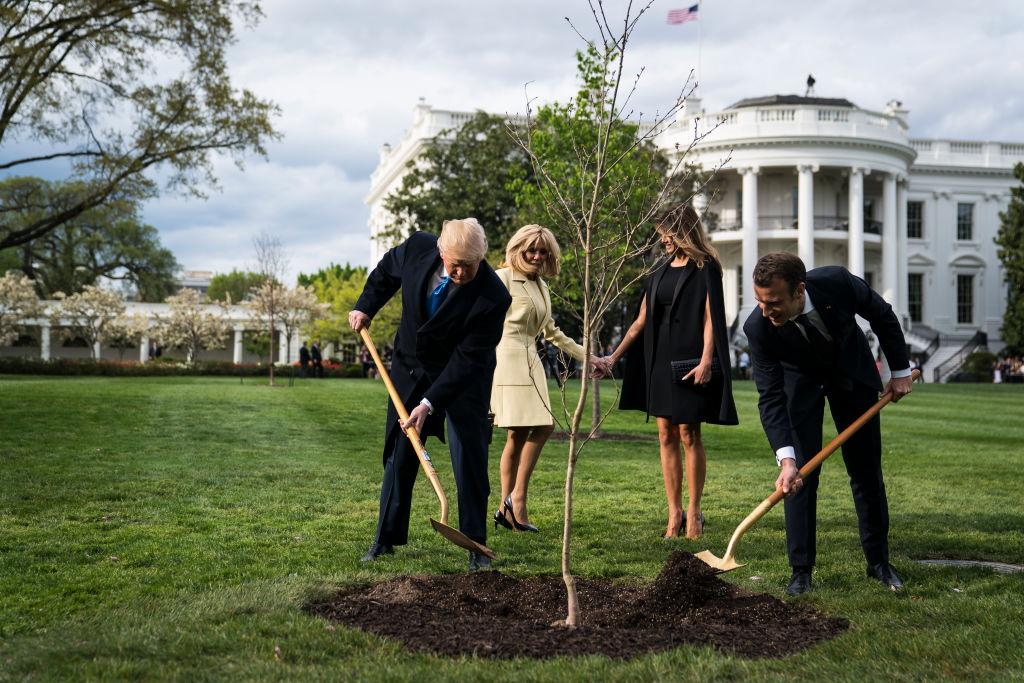 Pomul simbol al prieteniei dintre Donald Trump și Emmanuel Macron s-a uscat