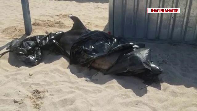 Doi delfini morţi au eşuat luni dimineaţă, unul pe plajă din Mamaia, celălalt la Costineşti