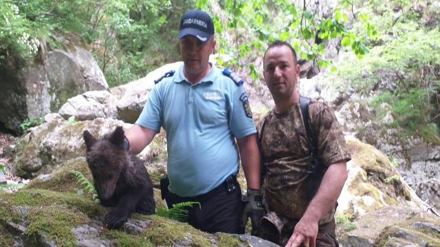 Un pui de urs, blocat între stânci. Cum a fost salvat de jandarmii montani