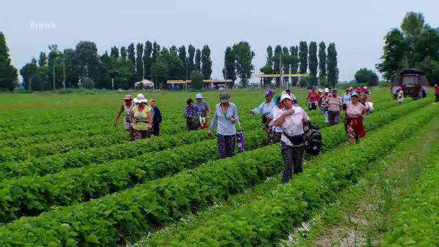 Raluca Turcan: Agenţiile de plasare, obligate să asigure transportul la destinaţie al lucrătorilor români în străinătate