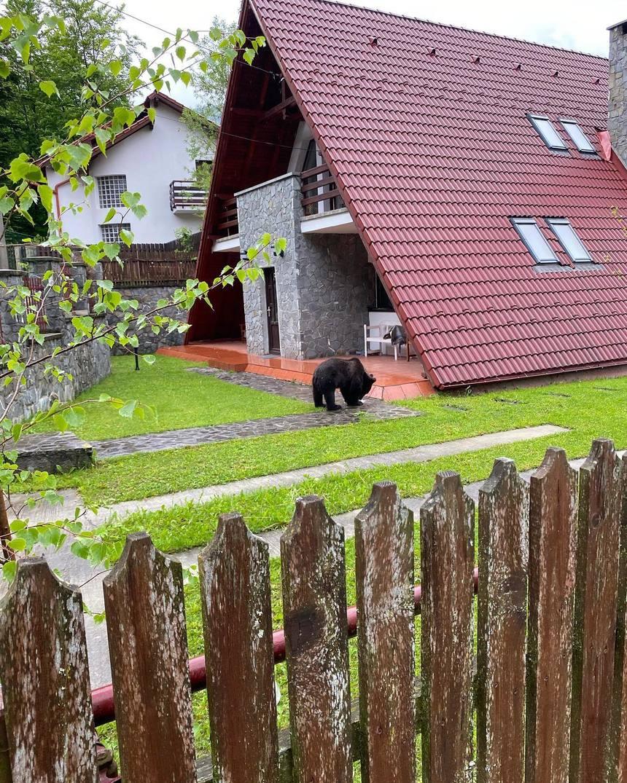 VIDEO. Un pui de urs a fost filmat în curtea unei case, la Sinaia