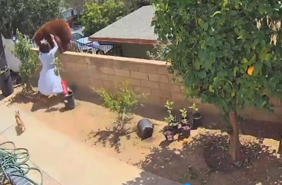 """O fată de 17 ani """"s-a luptat"""" cu un urs pentru a-și salva câinii. Momentul a devenit viral"""