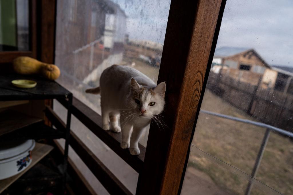 O femeie din Spania a fost mâncată de pisicile sale după ce a murit
