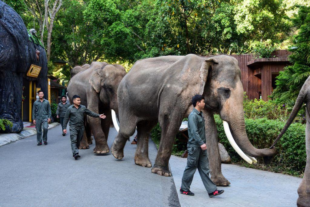 """Chinezii au făcut un """"mare zid"""" de camioane contra unei turme de elefanţi. Motivul migrației acestora, un mister"""