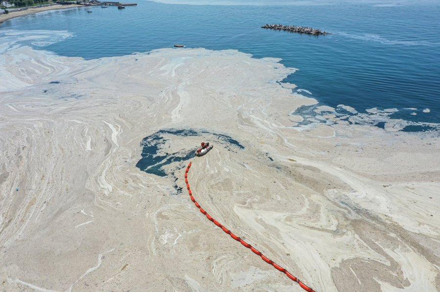 Un strat gros de alge, favorizat de poluare, a acoperit coastele Mării Marmara