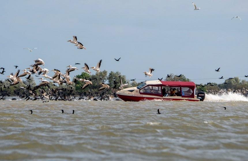 Imagini revoltătoare în Deltă. O şalupă, fotografiată intrând în forţă într-o colonie de pelicani