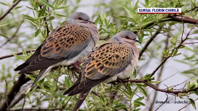 Zeci de specii de păsări sunt ameninţate cu dispariţia. O nouă lege ar permite vânarea lor în număr mare