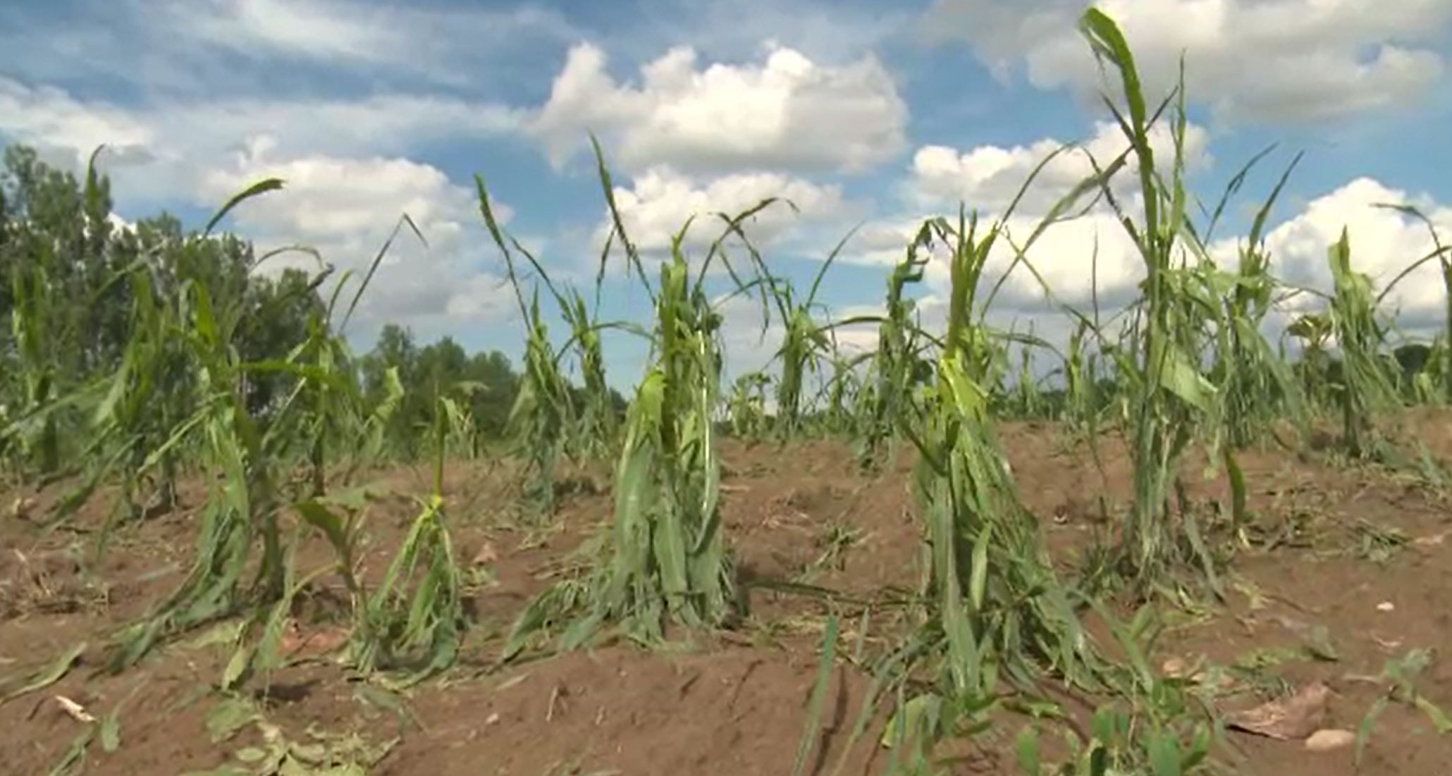 Dezastru în Dâmbovița, din cauza grindinei. Culturile fermierilor au fost nimicite