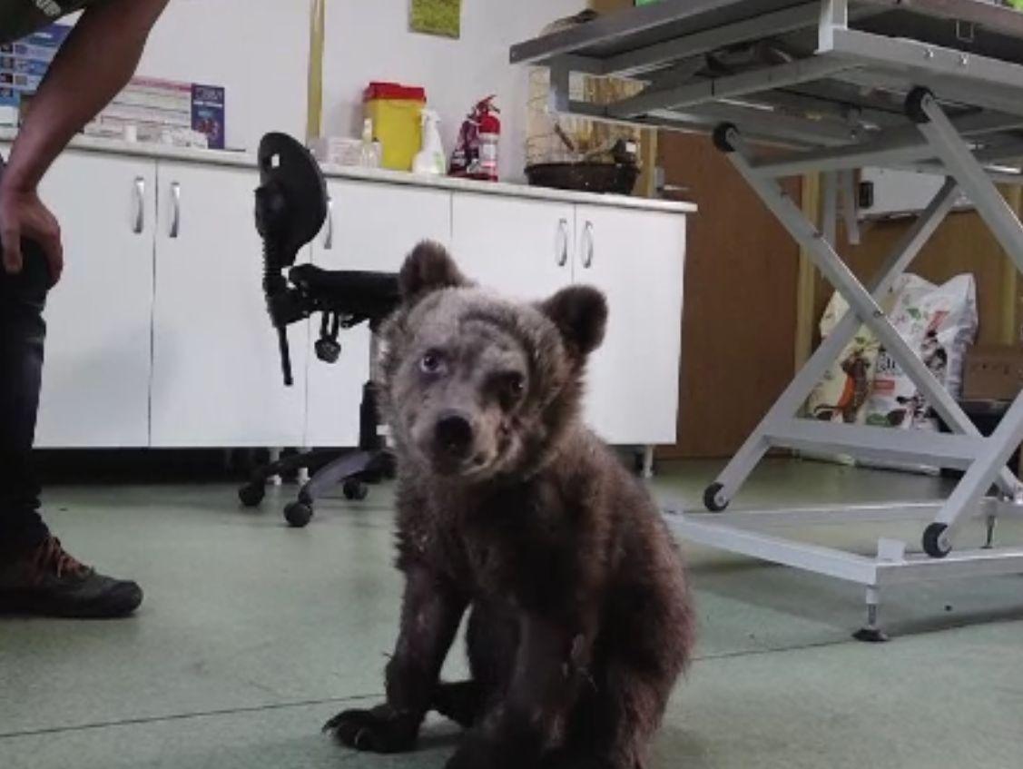 Prea mulți pui de urs rămân orfani din cauza braconajului ori accidentelor. Unde funcționează singurul orfelinat din Europa