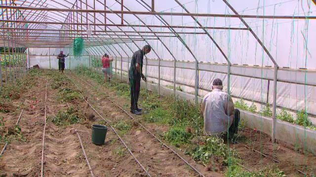 """Uniunea Europeană pregătește o nouă campanie, """"Noul fermier"""". Doritorii vor putea accesa până la 100.000 de euro"""