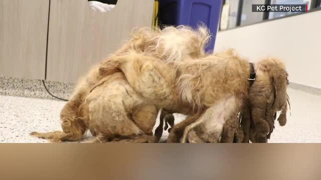 Transformarea virală a unui câine găsit cu blana într-o stare deplorabilă. Cum arată acum