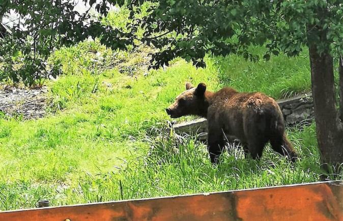 Un urs a intrat în curtea Spitalului de Psihiatrie Voila, din județul Prahova