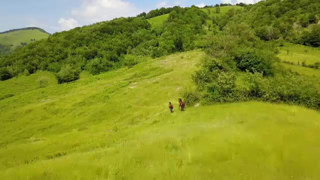 Experiență inedită în inima Munților Țarcu. Cât costă un tur de safari în pădurile unde trăiesc zimbri