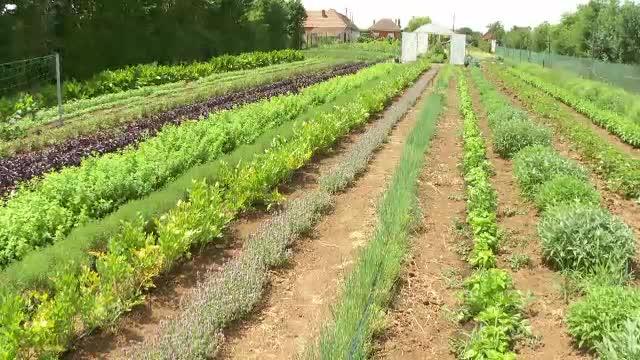 Ministerul Agriculturii dă fonduri pentru cei care cultivă plante aromatice, dar banii riscă să rămână nefolosiți