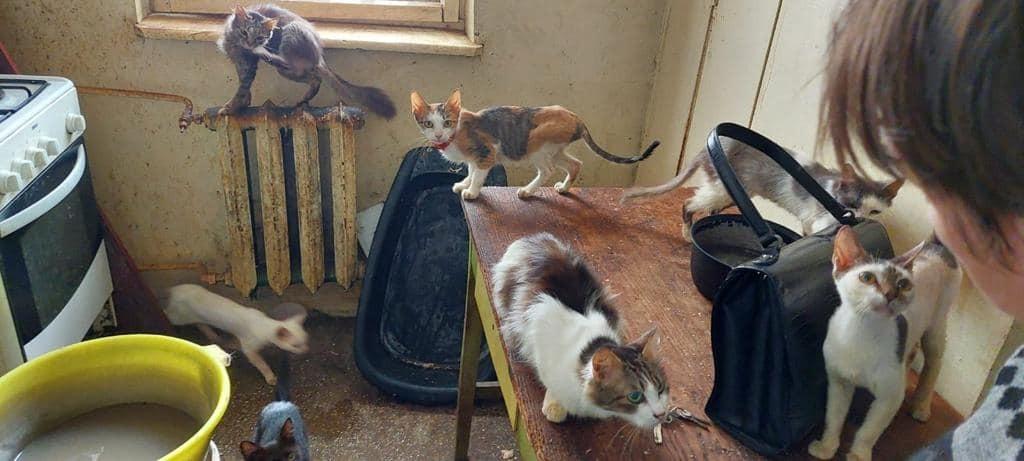 18 pisici și 5 câini, salvați dintr-un apartament din Botoșani. În ce condiții trăiau animalele. GALERIE FOTO
