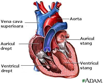 O noua gena a infarctului, descoperita de oamenii de stiinta americani
