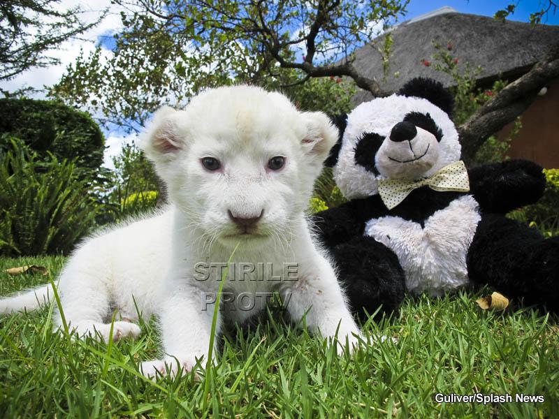 Ea este Lily, are 3 saptamani si prietenul ei bun este un panda de plus