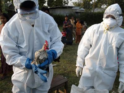 Primul caz de gripa aviara depistat in Hong Kong din 2003
